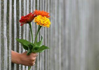 Ceny květin rostou
