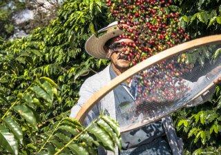 Produkce kávy v Brazílii, ilustrační foto