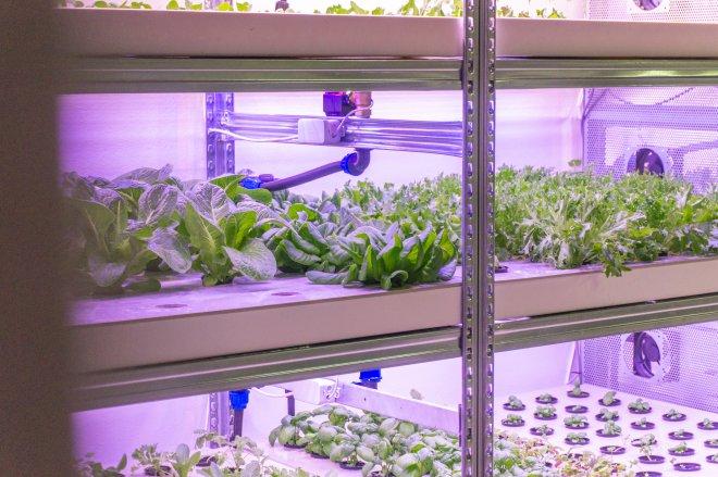 Zelené oázy v poušti. Český GreeenTech v Dubaji boduje, bude i v místní Ikei