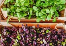 Plodiny se pěstují zásadně bez postřiků. Dostává se jim přesně tolik živin, kolik potřebují.